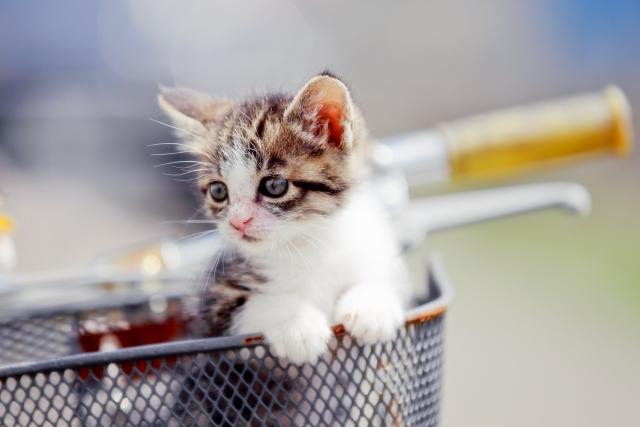捨てられている子猫