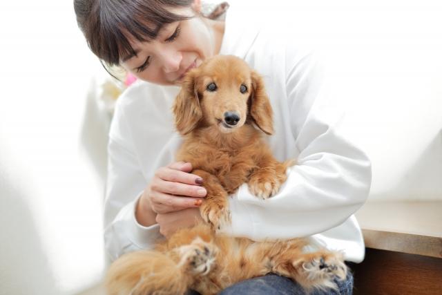 素直な子犬と遊ぶ女性