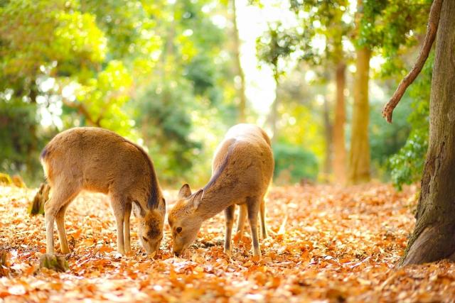 鹿の仲良しカップル